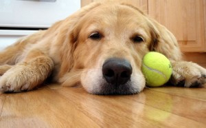 dog with ball 2